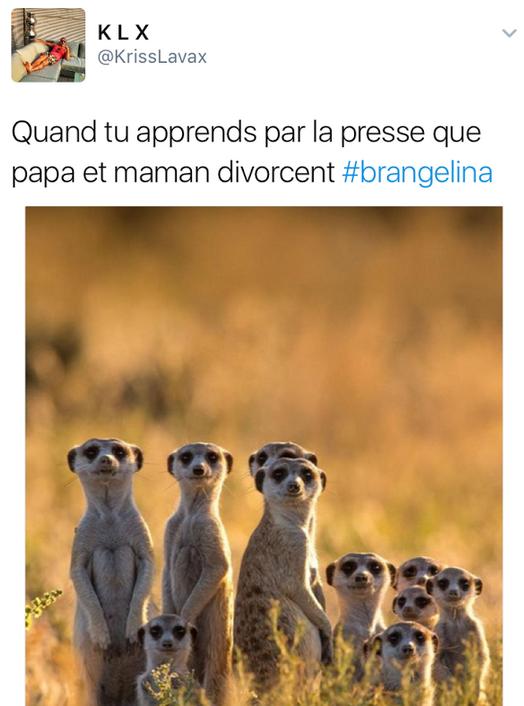 Public Buzz : Divorce Brangelina : les réactions hilarantes des internautes !
