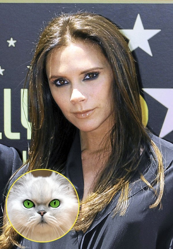 Victoria Beckham : en matière de tendances, Posh a du museau. Moins son chirurgien, apparemment !