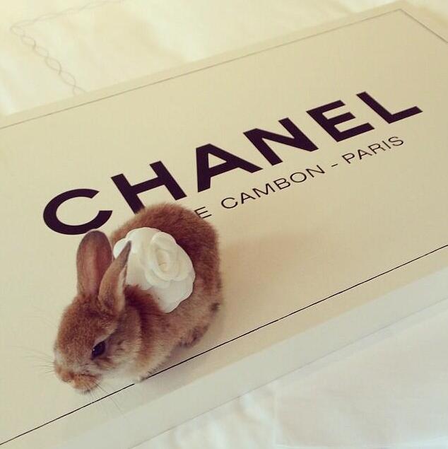 Cecil, le lapin de Cara Delevingne et meilleur ami de Choupette