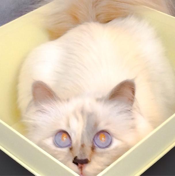Choupette et ses yeux couleur de l'océan