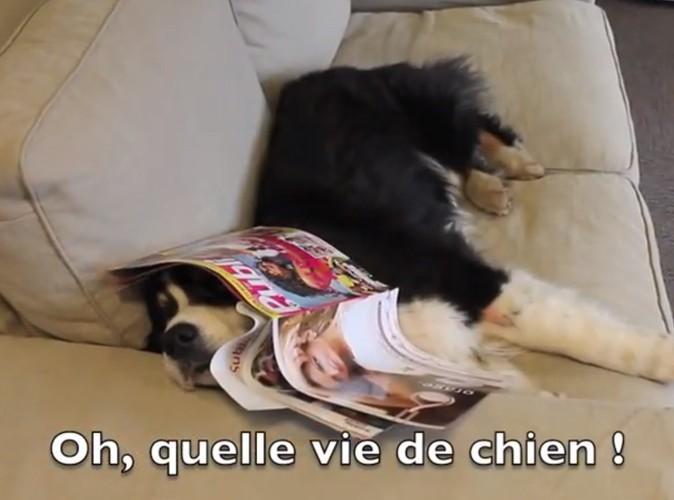"""La rédac pète un câble ! Episode 11 : """"Une semaine de chien"""" !"""