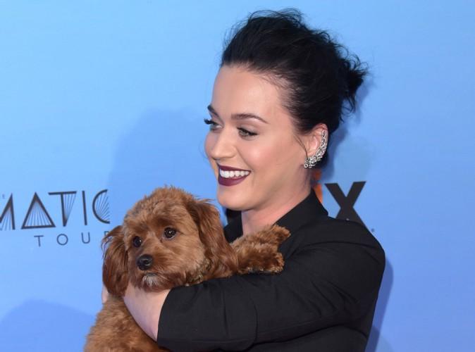 Katy Perry : une nouvelle déclaration d'amour pour Butters !