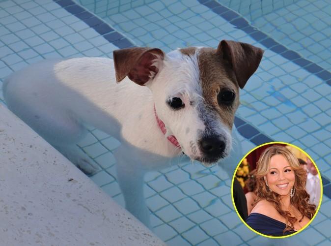 Mariah Carey : son chien, c'est son meilleur coach !