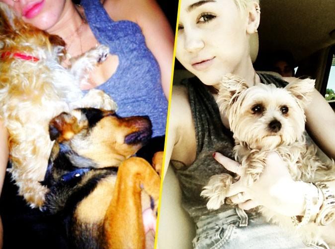Miley Cyrus : elle n'a plus que ses chiens pour faire des câlins !