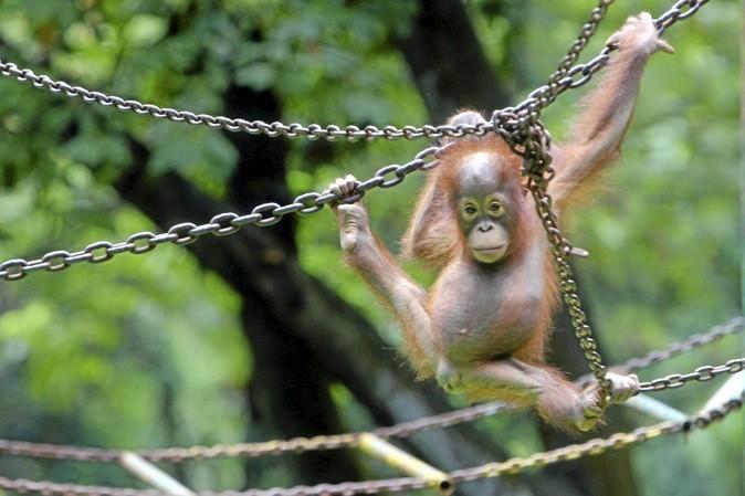 Jardin des Plantes vous invite à rencontrer les soigneurs pour découvrir le quotidien des animaux.