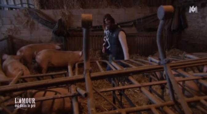 Florent présente ses cochons à Elodie