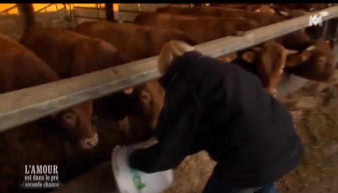 Sonia est allée avec Christophe nourrir les vaches de bonne heure !