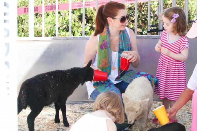 Même le mouton noir a le droit de manger !