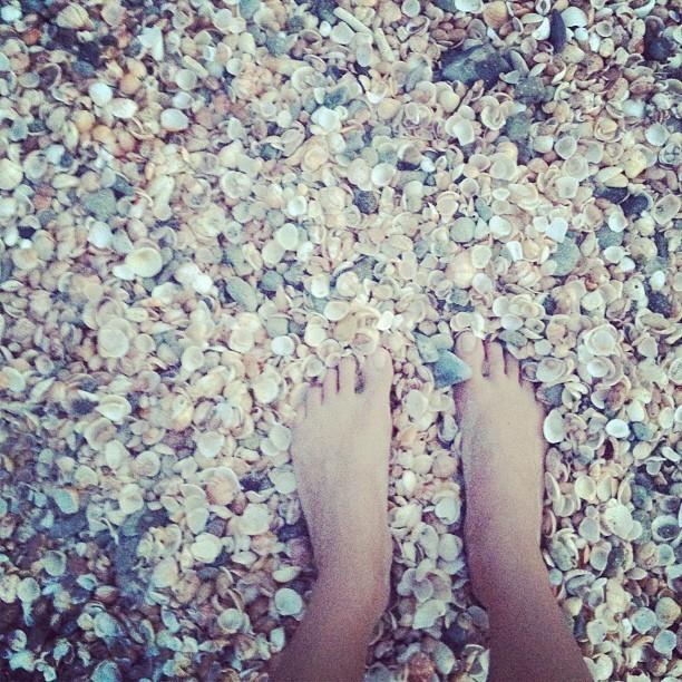 Les pieds dans les coquillages