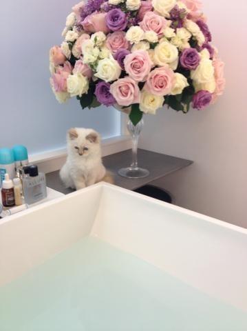 Trop mimi ! (et la salle de bains aussi !)