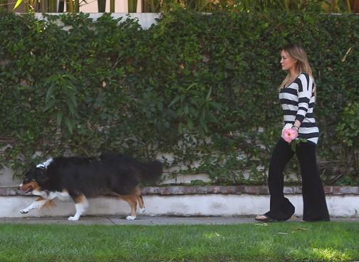 Dur dur de promener son chien !