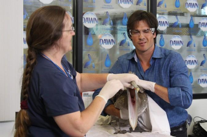 Ian Somerhalder : Canon, même pour soigner des oiseaux !