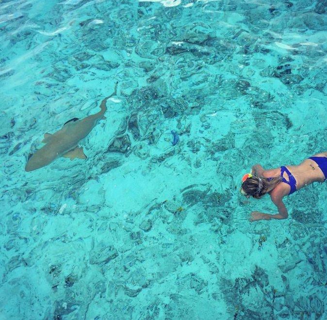 Laeticia nage avec les requins