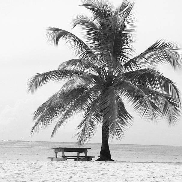 """""""Le lieu de notre déjeuner #Tobago"""""""