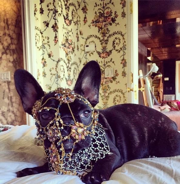 Lady Gaga : elle s'amuse à déguiser son chien Asia et s'attire (encore) les foudres de la PETA !
