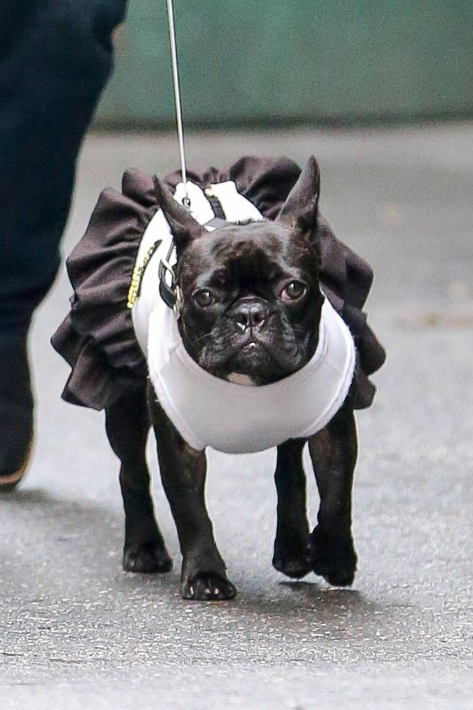 Photos : Lady Gaga : Un fashion faux pas qui a du chien !