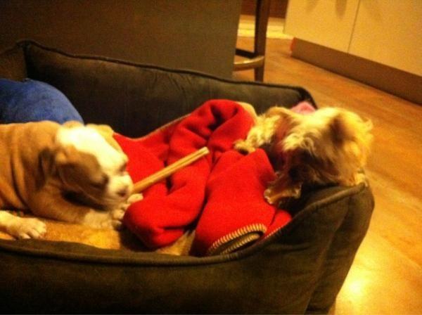 Ziggy et Lila, la chienne de Miley !