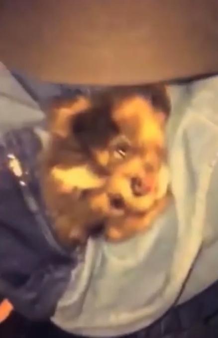 Rihanna et son chien Pepe