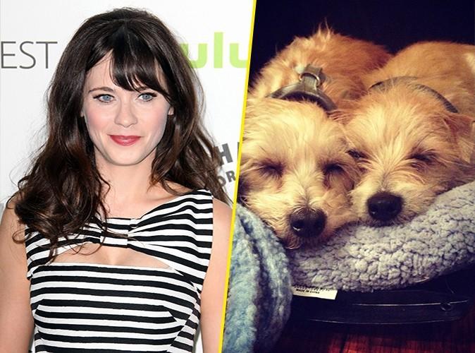 Zooey Deschanel : elle adopte deux petits chiens abandonnés !